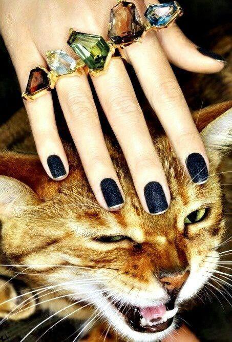 meow rings